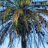 除结构树之外 免版税库存照片