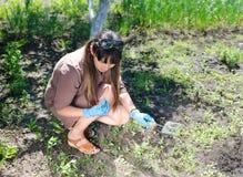 除草她的夏天菜园的妇女 免版税库存图片