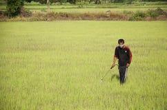除草药的农夫喷洒的化学制品在稻或米领域 免版税图库摄影