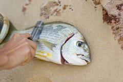 除鳞的鲜鱼 免版税库存照片