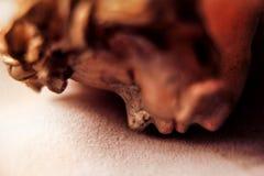 陶瓷头 库存图片