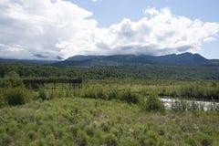 陶瓷工沼泽野生生物保护区安克雷奇阿拉斯加 图库摄影