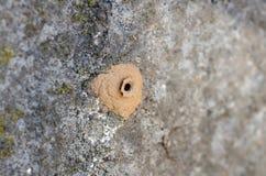陶瓷工黄蜂的家在混凝土的 免版税库存图片