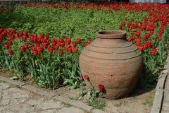 陶瓷瓦器和红色郁金香 免版税库存照片