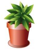 陶瓷绿色植物罐 免版税库存照片