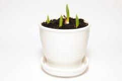陶瓷绿色罐射击白色 库存图片