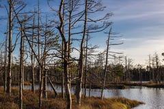 陷入沼泽在与黑暗的云彩的日落在拉脱维亚 免版税库存图片