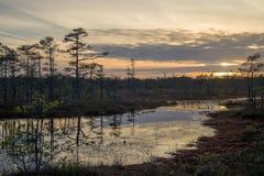 陷入沼泽在与黑暗的云彩的日落在拉脱维亚 免版税库存照片