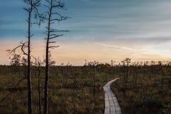 陷入沼泽在与黑暗的云彩的日落在拉脱维亚 库存照片