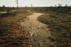 陷入沼泽在日落的光下在夏天 Kemeru拉脱维亚 免版税库存图片