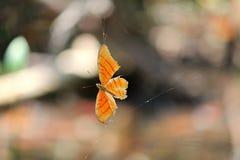 陷进的蝴蝶 免版税库存图片