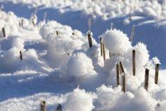 随风飘飞的雪和麦子 免版税库存照片