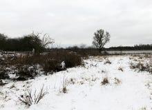 随风飘飞的雪在冬天 免版税库存照片