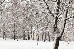 随风飘飞的雪在冬天 库存图片