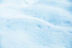 随风飘飞的雪在森林里 免版税库存照片
