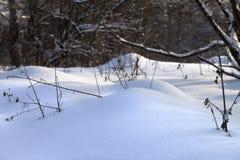随风飘飞的雪在降雪以后的森林里 库存照片