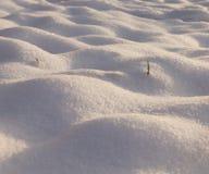随风飘飞的雪,日落 库存照片