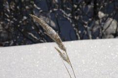 随风飘飞的雪 免版税图库摄影