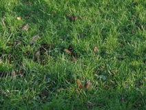 隐瞒下落的秋叶的长的草 免版税库存照片