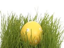隐藏的复活节彩蛋 图库摄影