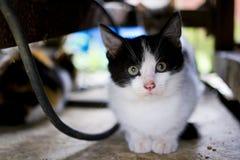 隐藏的小猫 库存图片