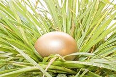 隐藏的蛋金黄草 库存图片