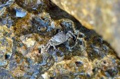 隐藏的螃蟹 免版税库存照片