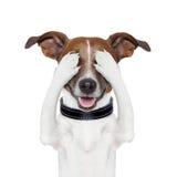 隐藏的覆盖物眼睛狗 免版税库存图片