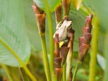 隐藏的青蛙 免版税库存图片