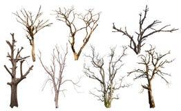 隔绝许多死的树 免版税图库摄影