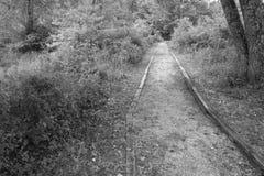 障碍容易接近的森林地足迹 库存照片
