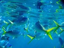 障碍巨大寿命海洋礁石下 图库摄影