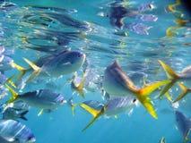 障碍巨大寿命海洋礁石下 免版税库存照片