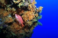 障碍极大的礁石 库存照片