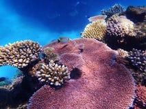 障碍极大的礁石 免版税库存图片