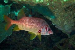 障碍潜水的极大的礁石 库存照片