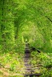 隧道在森林 免版税库存图片