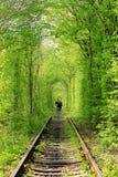 隧道在森林 免版税库存照片