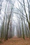 隧道在雾的森林里 库存图片
