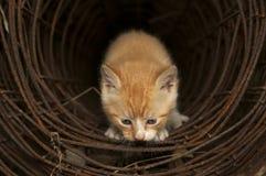 隧道小猫 免版税库存图片