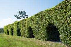 隧道树在公园 库存照片