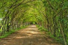 隧道树 库存图片