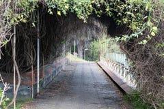 隧道植物 免版税库存照片