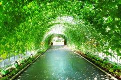 隧道蔬菜 库存图片