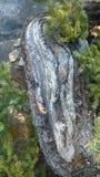 隧道mointain弯曲的树山边 免版税库存图片