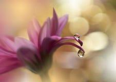 难以置信地美好的自然 艺术摄影 花卉幻想设计 抽象宏指令,特写镜头 金黄的背景 惊人的五颜六色的花 免版税图库摄影