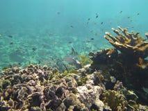 鱼珊瑚礁和浅滩在红海底部的在水下的照片 免版税库存照片