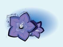 难看的东西会开蓝色钟形花的草开花图画 库存照片