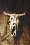 难看的东西公牛头骨 免版税库存图片