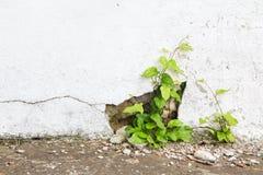 难看的东西混凝土墙和绿色植物、背景和纹理 葡萄酒口气 免版税库存照片